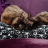 Ms Cat Kat